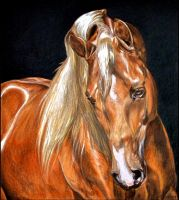 Drawing- Arabian horse by Ennete