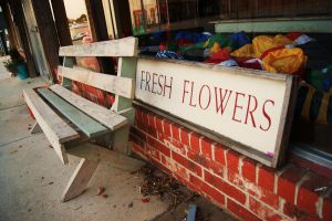 Fresh Flowers by Sheighness