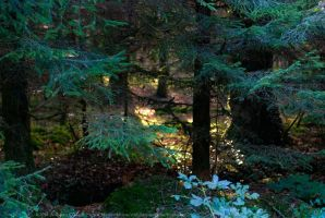 Newcastle Forest, Longford, Ireland. by fluffyvolkswagen