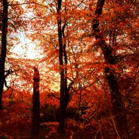 Red Fested Leaves by NeoJoeArt1997