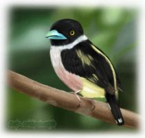 Black and Yellow Broadbill by liyaperfidious
