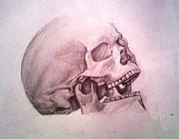 Skull by Stephbejar