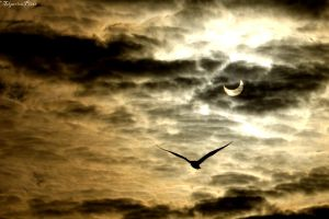 Freedom in Eclypse by Telperion-Photo