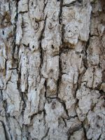 More Bark Texturess by Neriah-stock