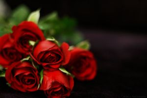 red roses by caglahande
