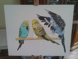 Finished pic of Budgies by Ratsathome