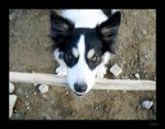 See My Stick by BorderCollie
