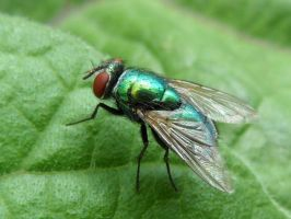 green fly on green leaf by Paul774