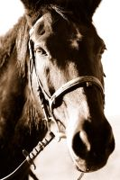 Retired racing horse by pixelmadness