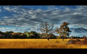 My Savanna HDR by firegold