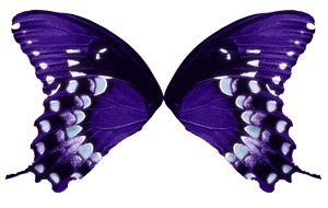 Butterfly Wings-Purple Aqua by FairyFindings