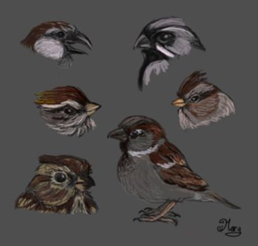 sparrow birds 2 :) by mary3m