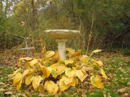 The Birdbath and Death by ginger-rock