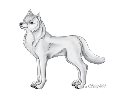 White wolf Seph by Seraphi91