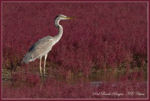 Life on Mars - Grey Heron by Jamie-MacArthur
