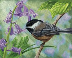 Black-capped Chickadee by Terryv83