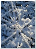 Winter composition... by Yancis