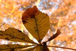 Light as a feather, but lighter than a leaf? by lifeforceinsoul