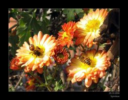 bees II by Spiritius