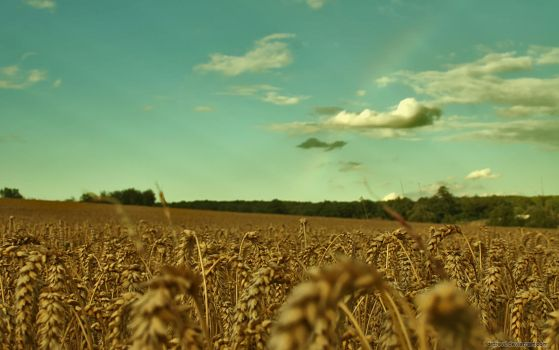 Wheat With Rainbow by drdrevil