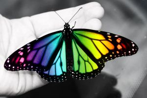 Colorful Butterfly by Zayix