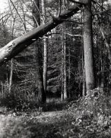 Through the Woods by DrivenSphere