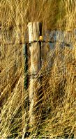 fence-post 3e13 by Roh-Klar