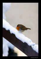 cute bird by kursad
