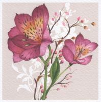 Salmon pink flowers by Vefday
