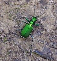 creepy crawlies02 by Holy-Win