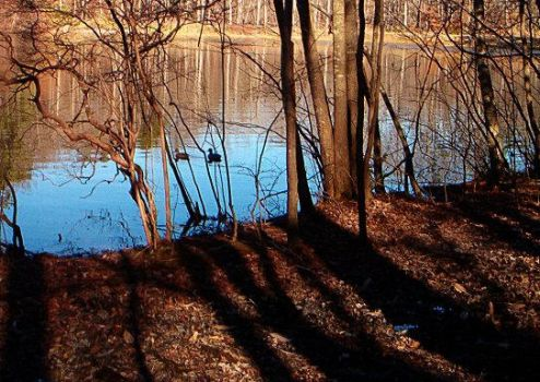 Sibley Pond with Ducks by zloizloi