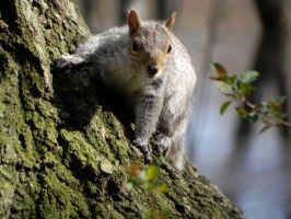 Squirrel in Park by Everruler