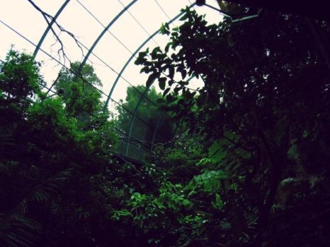 aviary by ether