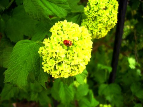 Ladybirds by EarthhelL
