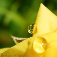 Sweet Refraction by ironmanbr