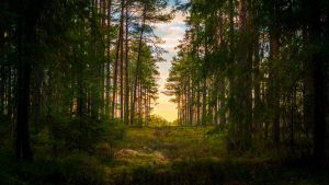 Forest road by sulevlange
