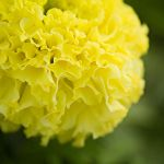 120. yellow II by littleconfusion