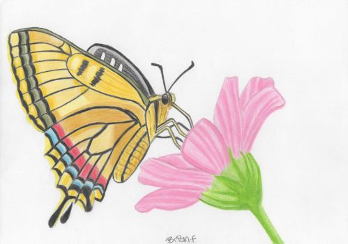 Butterfly and flower by ArtfullyArty