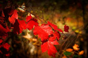 Autumn In Red by Nikonoclaste