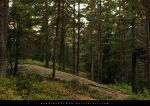 forest 007 by woodlandSTOCK