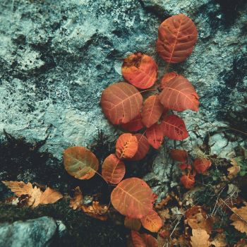 Red Leaves by sivandoganphoto
