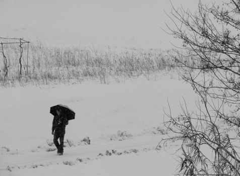 Walking Under the Snow 04 by adapanich