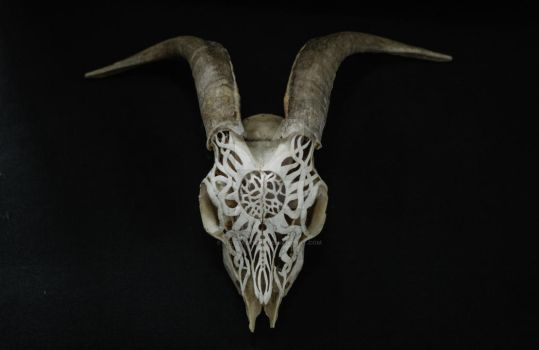 Goat Skull Carving, Raging sun by VictorSeiche