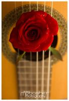 A Song For A Rose II by amobasher