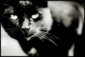 Black and dusty Cat by Amurrr