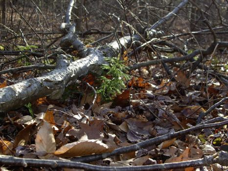 Green in the Winter - Session's Woods, CT by Shadowstep990