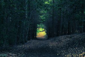 The light at the end of the road by AljoschaThielen