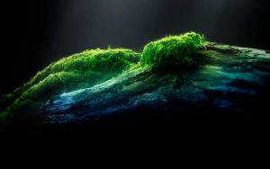Moss by REXTON