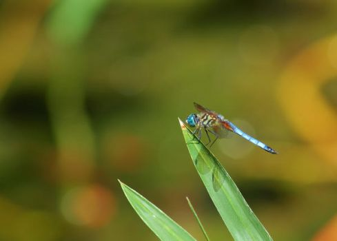 Dragonfly by Paperback-writer-00