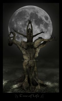 Tree of Life by plumbage